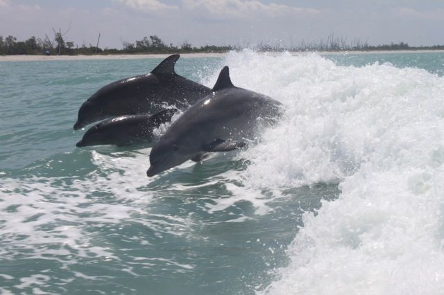 It's special to see dolphins from the beach.