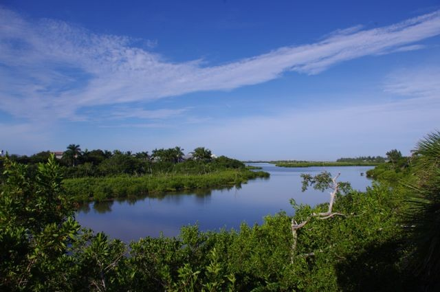 View of Clam Bayou from the Lookout Tower