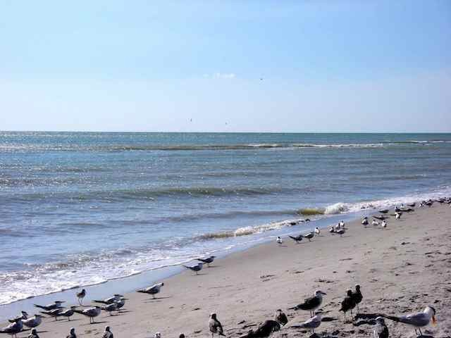 Our beaches are famous for shelling, fishing & wildlife.